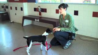 Trainer's Tip: Importance Of Puppy Socialization