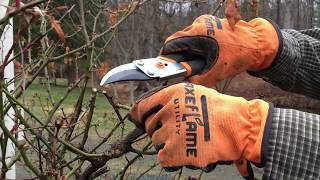 When And How To Prune A Rose Bush