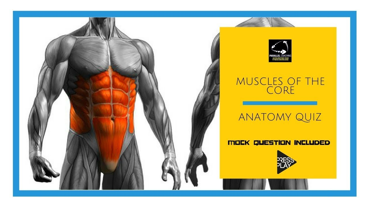 Muscles of the core: Anatomy quiz - YouTube