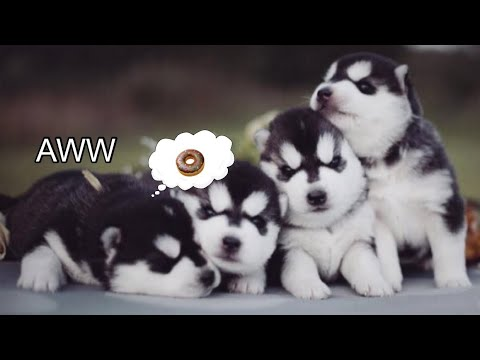 TRY NOT TO AWW || Cute Dog Videos Compilation 2019 || Cute Vines