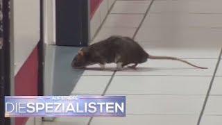 Rattenalarm in der Klinik am Südring!   Die Spezialisten   SAT.1 TV