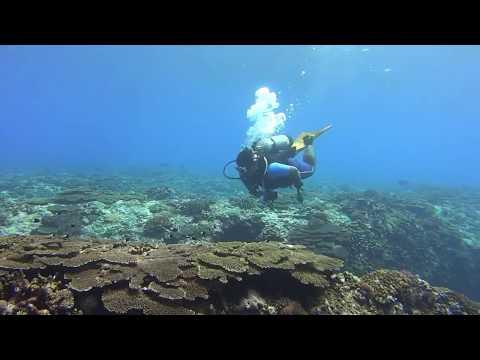 Dongsha Atoll coral gardens
