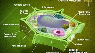 Celula Vegetal: Componentes e Funcoes (Plant Cell: Components and Functions)