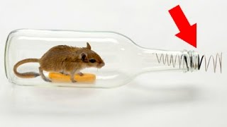 Repeat youtube video How to make a mouse trap with a plastic bottle 😱 Tutorial