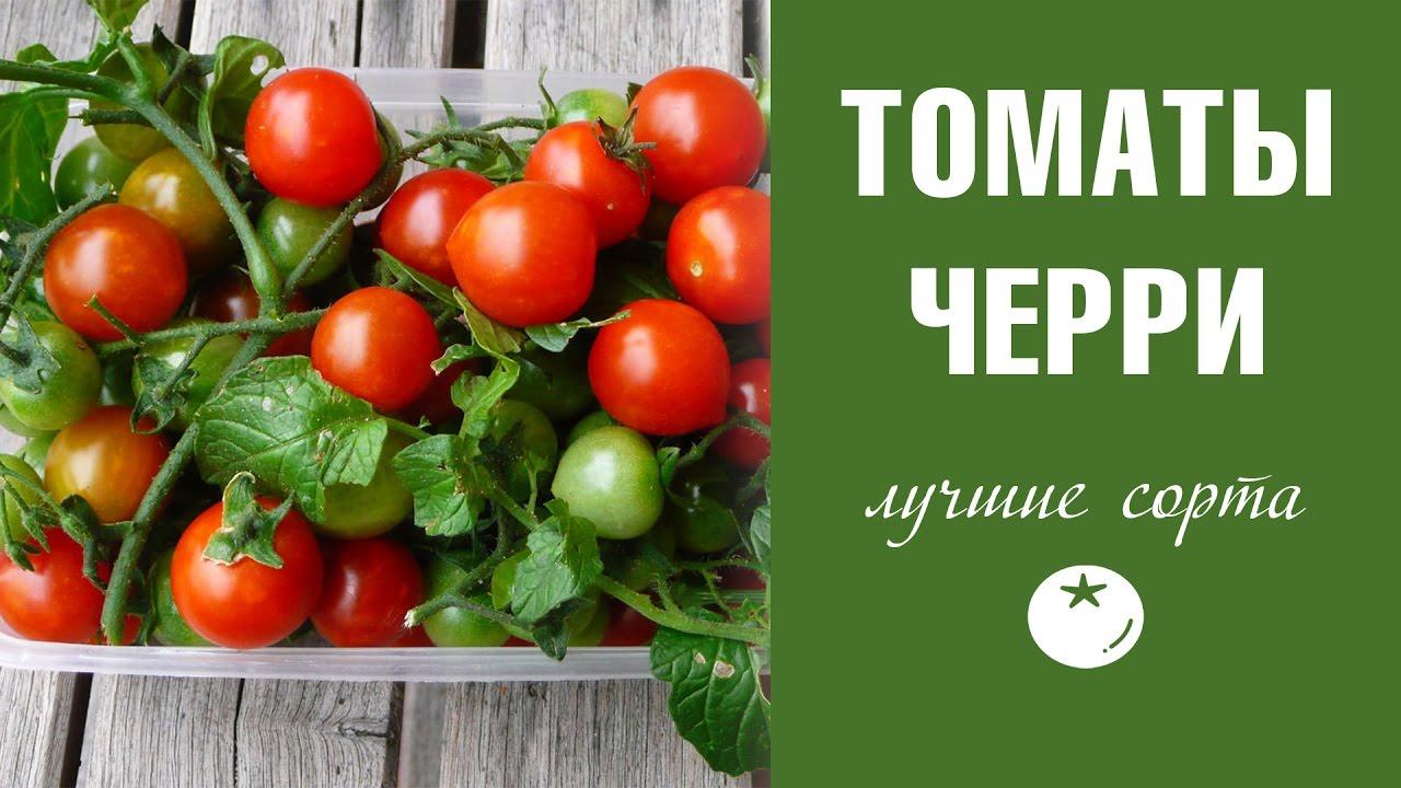 Томаты Черри ✦ лучшие сорта и их особенности
