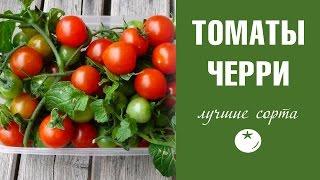 видео Ампельные помидоры: сорта томатов, выращивание с фото