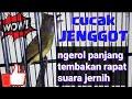 Cucak Jenggot Gacor Cocok Untuk Masteran Burung Burung Lomba  Mp3 - Mp4 Download