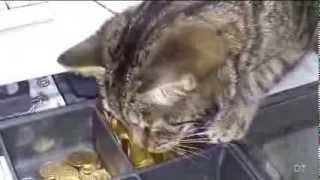 Смешное видео про кошек 90