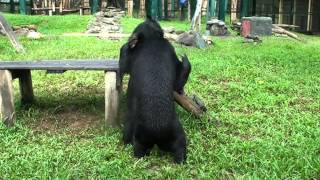 This rescued bear isn't afraid anymore – he's having the time of his life