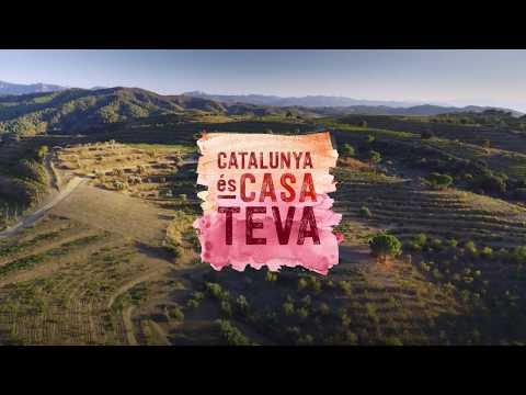 Catalunya és casa teva - Gaudeix de les vinyes i els cellers de Catalunya