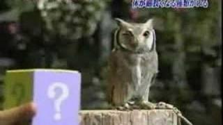 貓頭鷹嚇到之後的反應