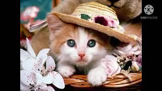 Милые котики и прикольные песни