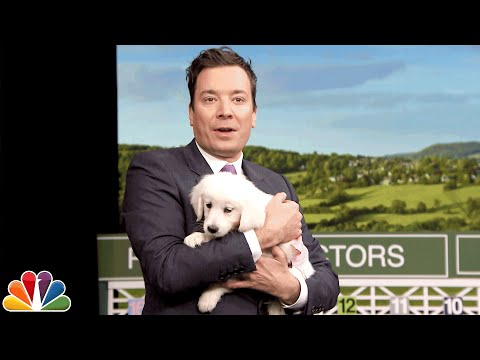 Puppies Predict the 2016 Kentucky Derby