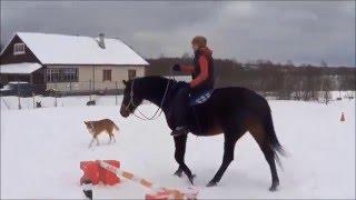 Обучение взаимодействию с лошадью на кордео, начало. Урок 4.