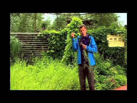 """Natur im Garten """"Ein Kräutergarten im Steinfeld"""" Sendung vom 9.9.2012"""
