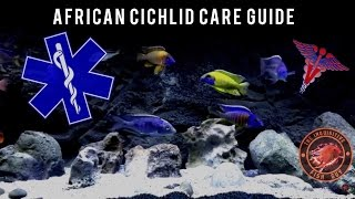 How To Care For African Cichlids | How To Get African Cichlids To Show Full Color Fast