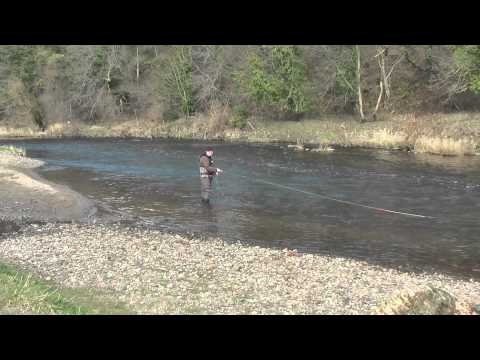 Spring Salmon Fly Fishing Techniques On The River Wear