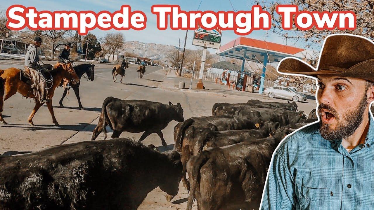 Herding 500 Cows Down Main Street! Vlog #36