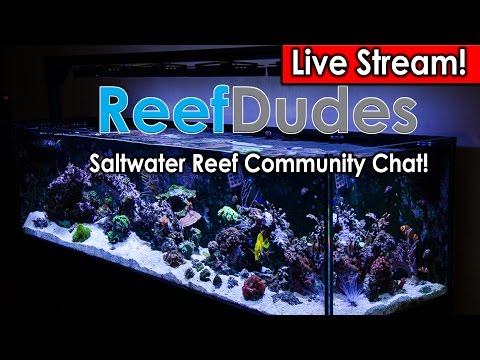 ReefDudes Saltwater Reef Chat Livesteam: Light: Radion G3 vs G4, T5, MH,