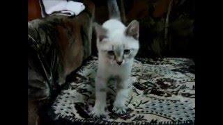 🐾 Котенок первый день в новом доме – котику 2 месяца