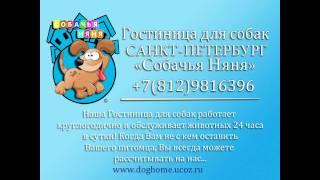 """Гостиница для собак Санкт-Петербург  """"Собачья Няня"""""""