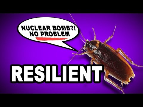 Learn English Words: RESILIENT - Meaning, Vocabulary with Pictures and Examples