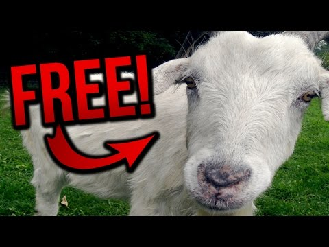GET A GOAT FOR FREE! (BroKen #7)