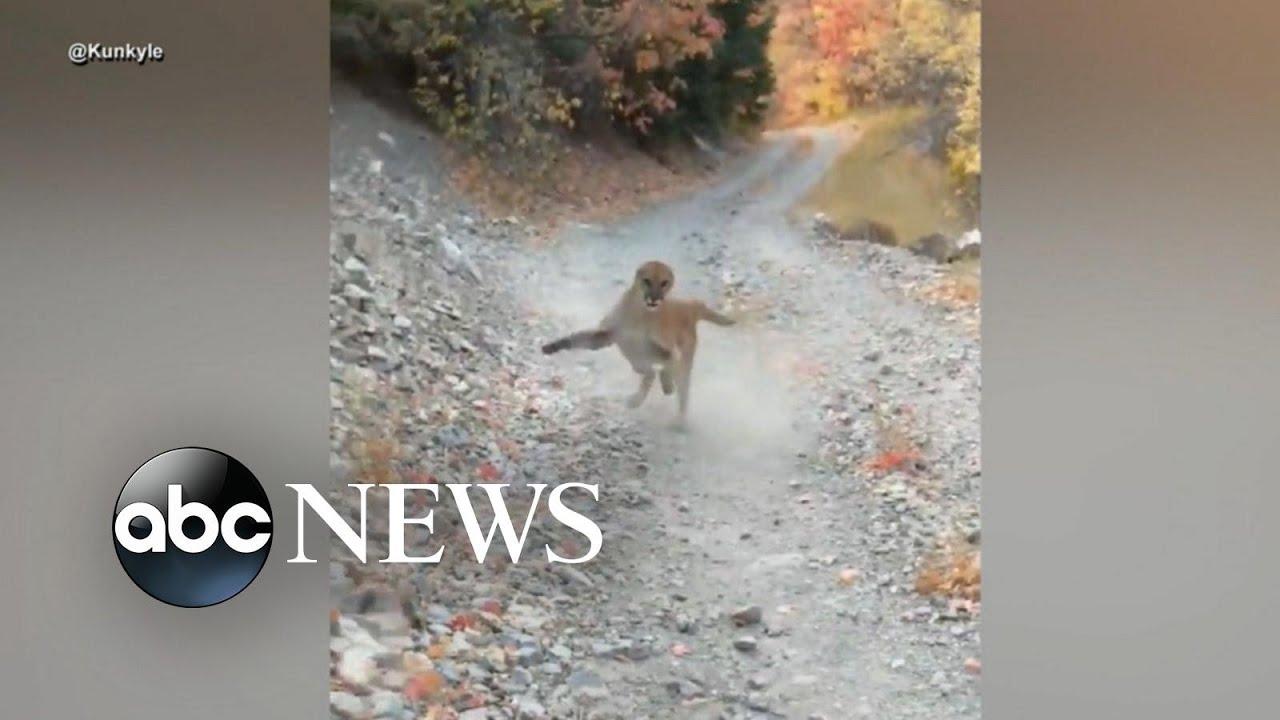 Download Cougar stalks hiker for 6 minutes