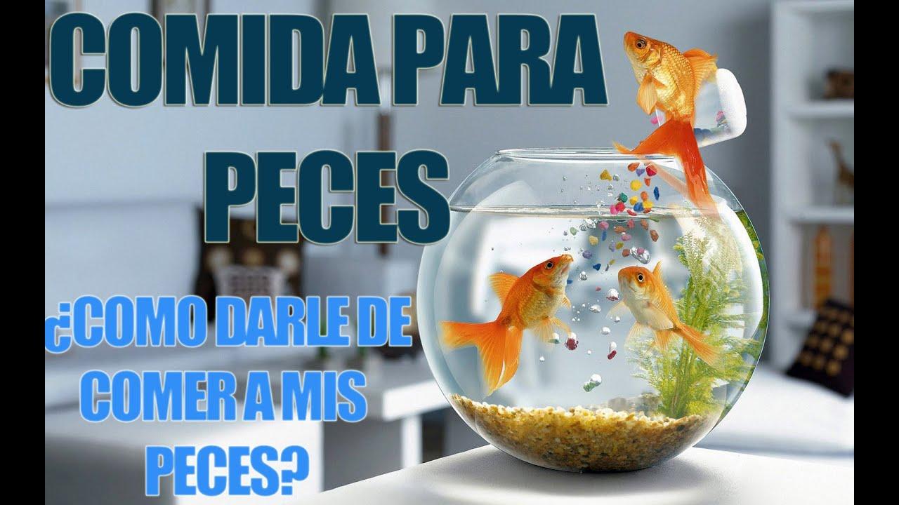 Marcas de comida como les doy de comer a mis peces youtube for Peces alimentacion