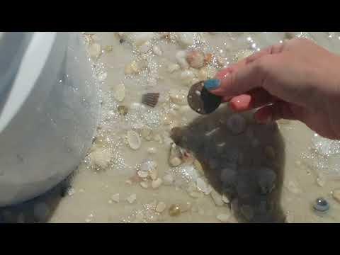 Shelling On Shell Island, Florida Near Panama City Beach