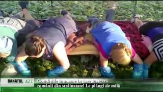 Condițiile inumane în care lucrează românii din străinatate! Le plângi de milă