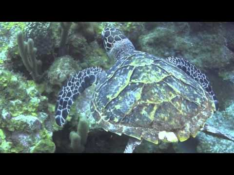 Action Scuba Montreal Goes Scuba Diving in Little Cayman