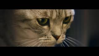 Video Curious Cats - Lamp - Whiskas TV ad download MP3, 3GP, MP4, WEBM, AVI, FLV Desember 2017