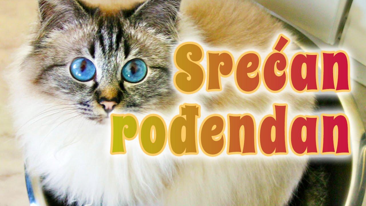 Srećan rođendan   birmanska mačka   YouTube