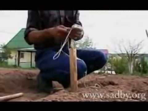 видео: Как разнообразить обычные грядки. || Ландшафтный Дизайн