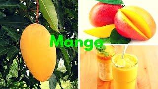 MANGO: Para Que Sirve El Mango ...!!!