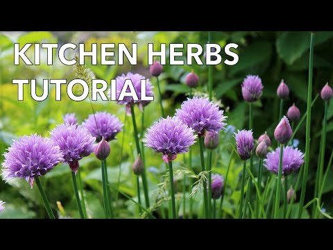 Easy Grow Kitchen Herbs Tutorial