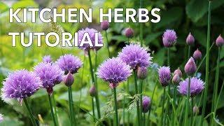 Easy Grow Kitchen Herbs Tutorial
