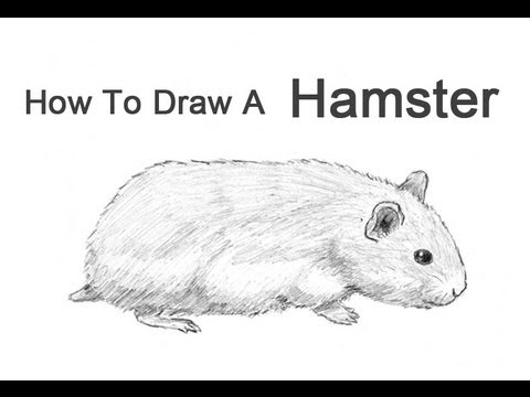 how to draw a hamster