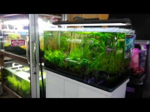 Fish & Aquarium Market , Jatujak Plaza, Bangkok Thailand