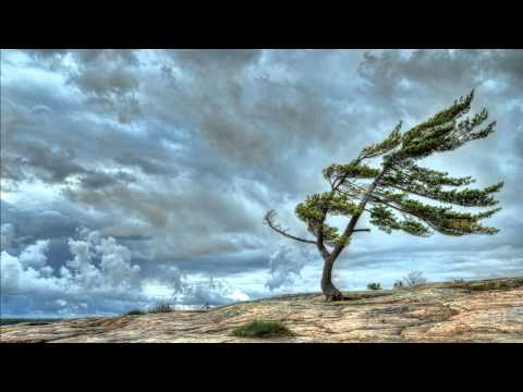 Sons da Natureza - Vento forte