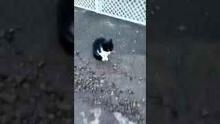 Котенок плачет 2018
