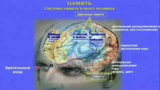 Нейробиология и психофизиология памяти - Шульговский Валерий