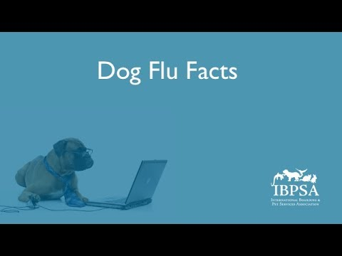 Dog Flu Facts for Pet Care Services Providers