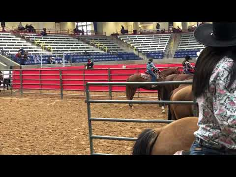 Wild About Fame Placing 30th Out Of 497 At The Christmas Cash Barrel Race In Amarillo, Texas In 2018