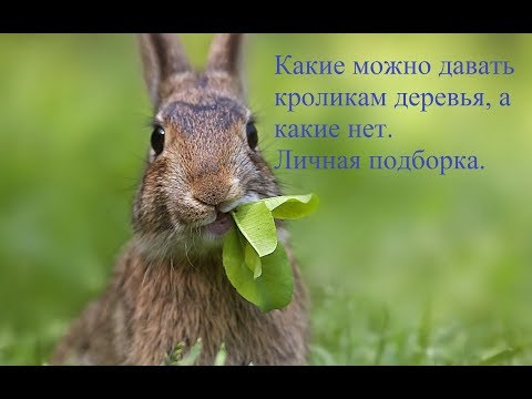 Полезные деревья для кроликов. Чем можно кормить любимцев.