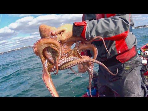 Octopus, Cuttlefish and Ikijime - Eging (Squid Jigging) #2 - Kayak Fishing- 1080HD 50fps