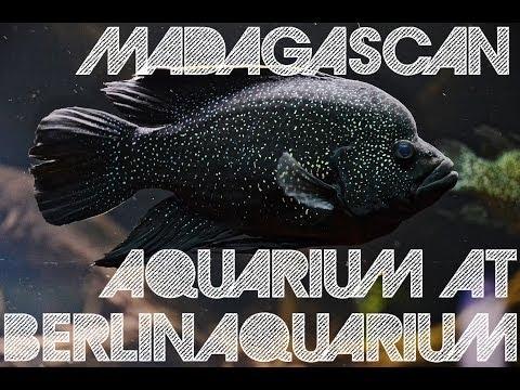 Madagascan Aquarium at Berlin Aquarium