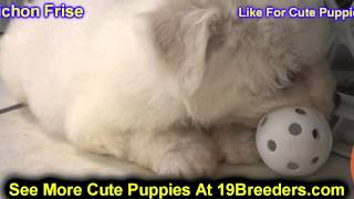 Bichon Frise, Puppies, For, Sale In Toronto, Canada, Cities, Montreal, Vancouver, Calgary