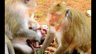 Baixar Bravo baby Maddix tries his best to move out from monkey Dolly,